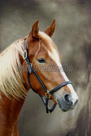 przyroda srodowisko kon zwierze zwierzeta zwierzatka