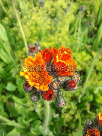 orange plant flower green bloom blossom