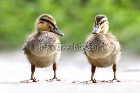przyroda srodowisko zwierze ptak zwierzeta zwierzatka