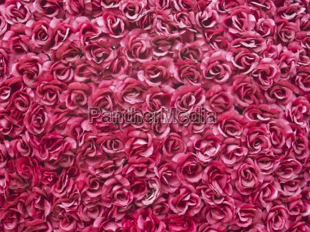 kwiat kwiatek zawod roslina roza flora