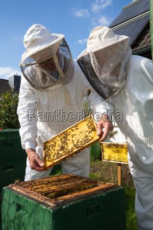 dwoch pszczelarzy utrzymanie ula pszczola