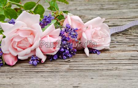 niebieski przedstawiac tablica kwiat kwiatek zawod