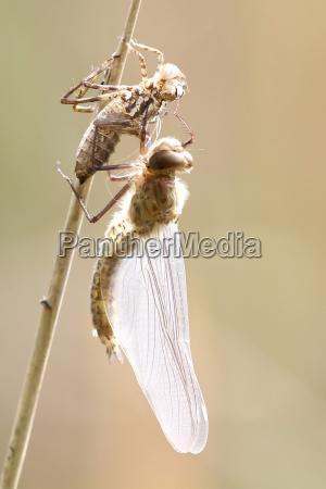 zwierze zwierzeta zwierzatka dragonfly przyrody wazki