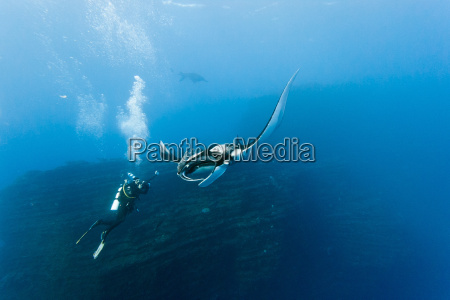 manta, and, photographer, on, the, blue - 9794406