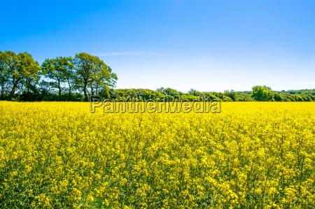 niebieski piekny mily rolnictwo przyroda srodowisko