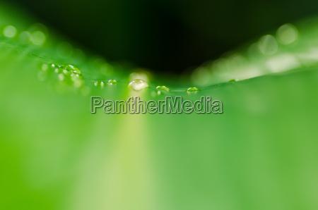 lisc przyroda srodowisko spasc kropla wody