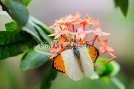 owad kwiat kwiatek zawod roslina latorosl