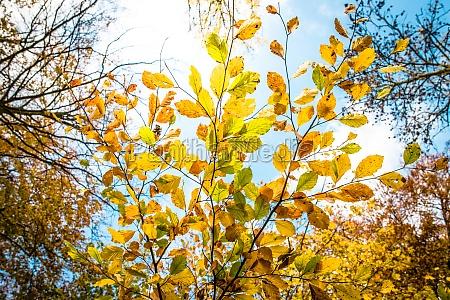 piekny mily lisc przyroda srodowisko kolor