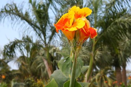 kwiat, kwiatek, zawod, roślina, latorośl, drzewa - 10820616