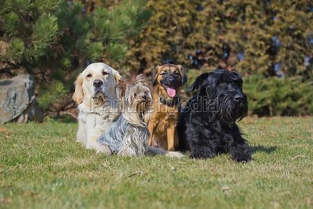 grupa czterech psow roznych ras