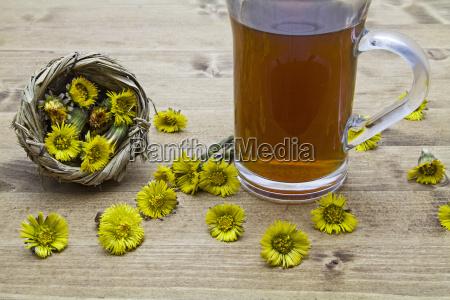 wiosenne kwiaty zwiastun wiosny asteraceae sredni