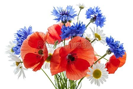 bukiet wildflower