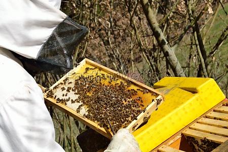 pszczoly ul pszczol miodnych pszczelarz