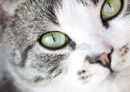 zblizenie zwierze zwierze domowe twarz buzia
