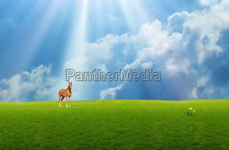 niebieski kon zwierze ssak zielony fauna