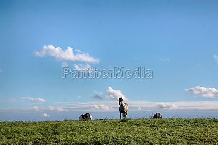 jechac konno jezdziectwo kon konie polska