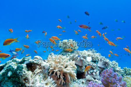 coral reef with soft and hard