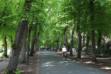 drzewo drzewa park niemcy republika federalna
