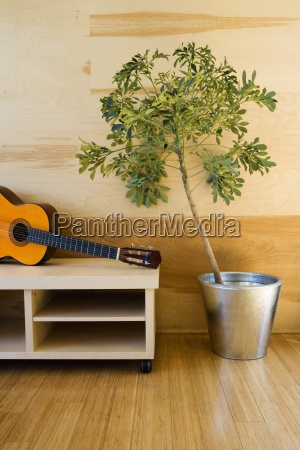 detail of potted plant and guitar