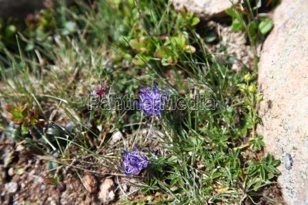 environment enviroment flower plant flowers traveling