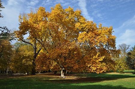 park kolorowe kolektora pole herbstfarben sezony