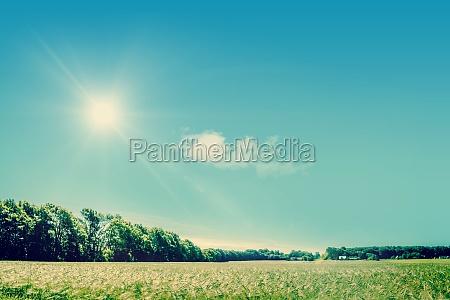 niebieski piekny mily przyroda srodowisko kolor