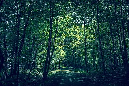 piekny mily lisc przyroda srodowisko drzewo