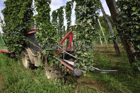owoceowoce hophoproslinaroslinyrolnictwoprodukcja roslinnaporzadek gruntow rolnychwiejskich gospodarkarolnictwo