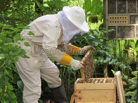 pszczelarz w odziezy ochronnej w pracy