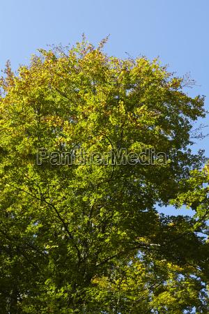 las drzewo drzewa krawedz lasu drzewo