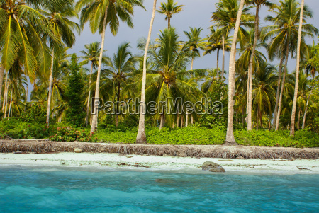 palm trees on tropical beach in