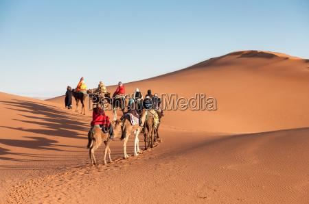 karawana wielbladow z turystami na saharze