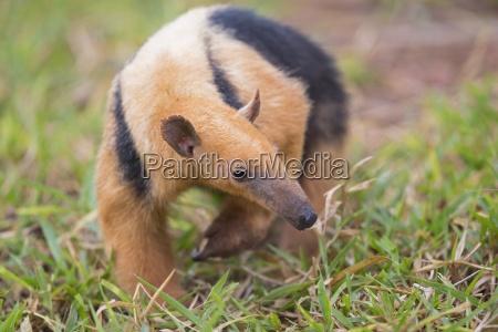 jazda podrozowanie kolor zwierze ssak zwierzeta