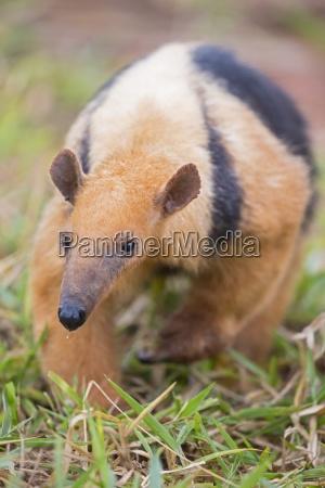 jazda podrozowanie plynny kolor zwierze ssak