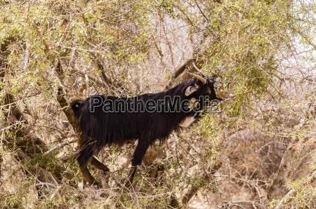 kolor drzewo drzewa zwierze ssak afryka