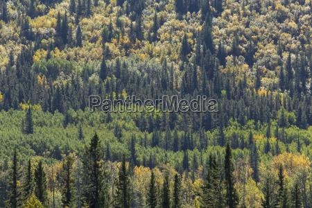 drzewo drzewa liscie wygodnie espen osika