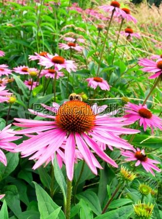stozek kwiat w polu