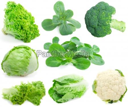 kapusta i zielony zbierania warzyw samodzielnie