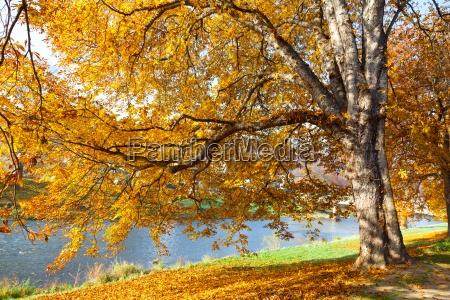 drzewa jesienia