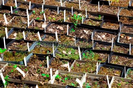 sadzonki roznych roslin w ogrodzie botanicznym