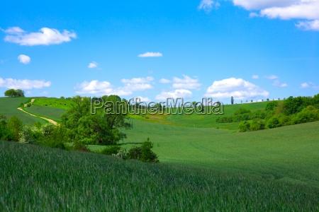 zielone pole na blekitne niebo
