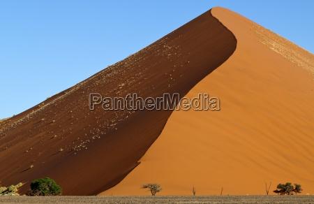 pustynia park narodowy afryka sawanna namibia