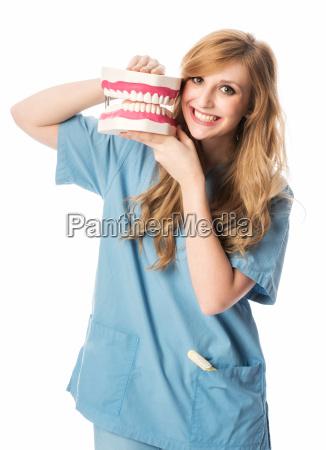 dentysta, pokazuje, modelu, zęba - 13416102
