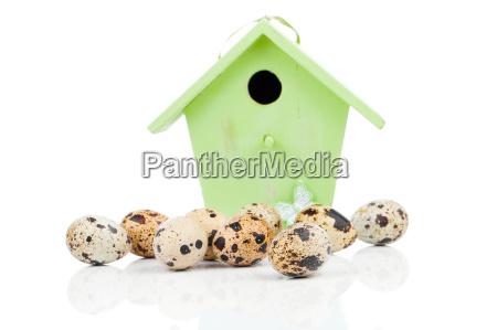 jaja przepiorcze z ptasia domem dla