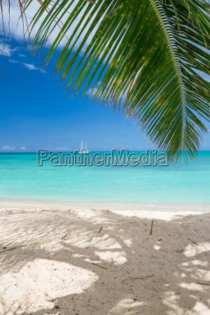 drzewo plaza brzegach brzeg nadmorski plazy