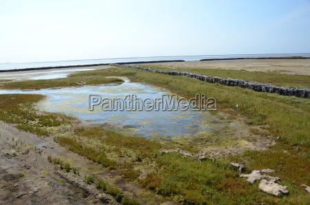 zielony ochrony woda morze polnocne morskich