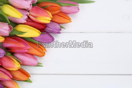 tulipan kwiaty wiosna lub dzien matki