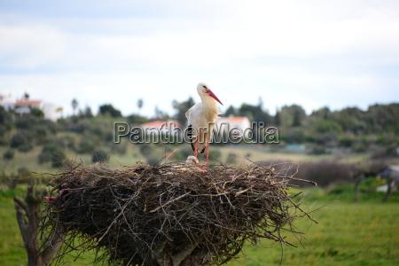 storks in the nest spain