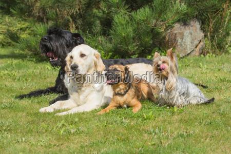 piekny mily zwierze zwierze domowe lato