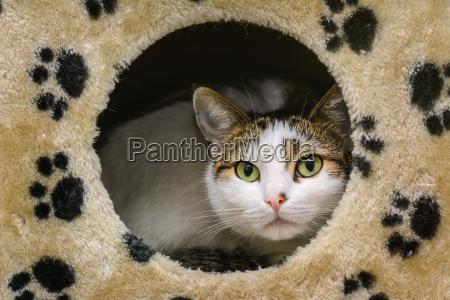 zwierze zwierze domowe kuscheltier pluszak lieblingstier